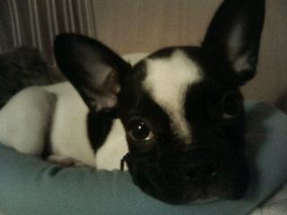 坂上忍の犬の名前の由来は?犬種も画像付きで紹介!