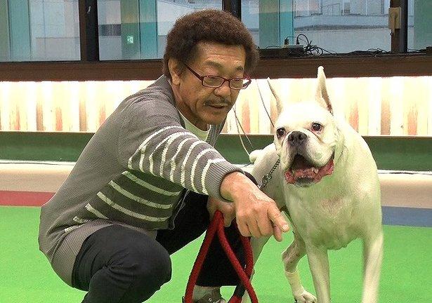 具志堅用高の愛犬グスマンの犬種は?名前の由来も紹介